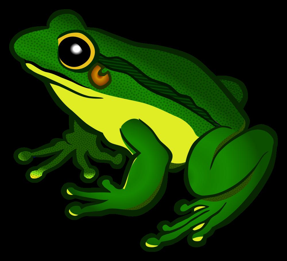 Frogs clipart hat. Onlinelabels clip art frog