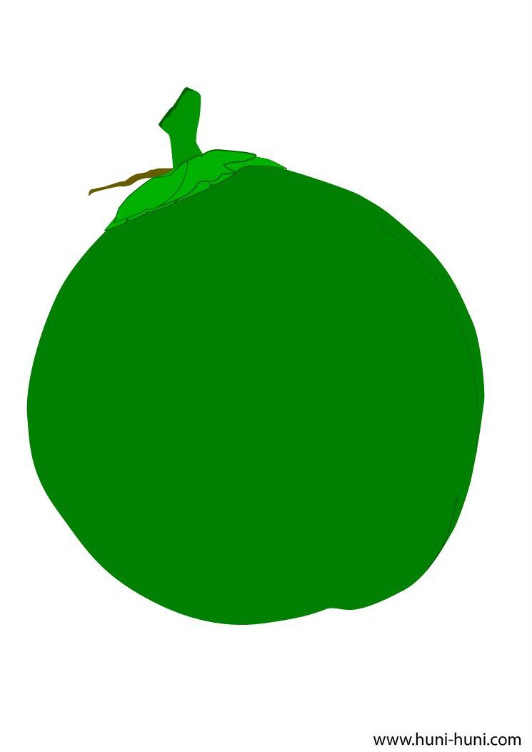 . Fruits clipart buko