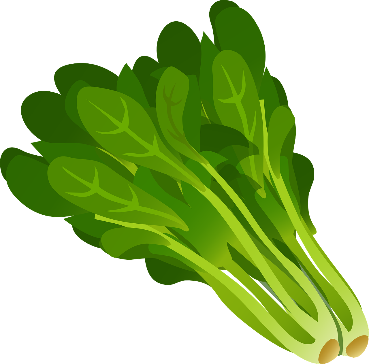 Freeze dried products product. Green clipart okra