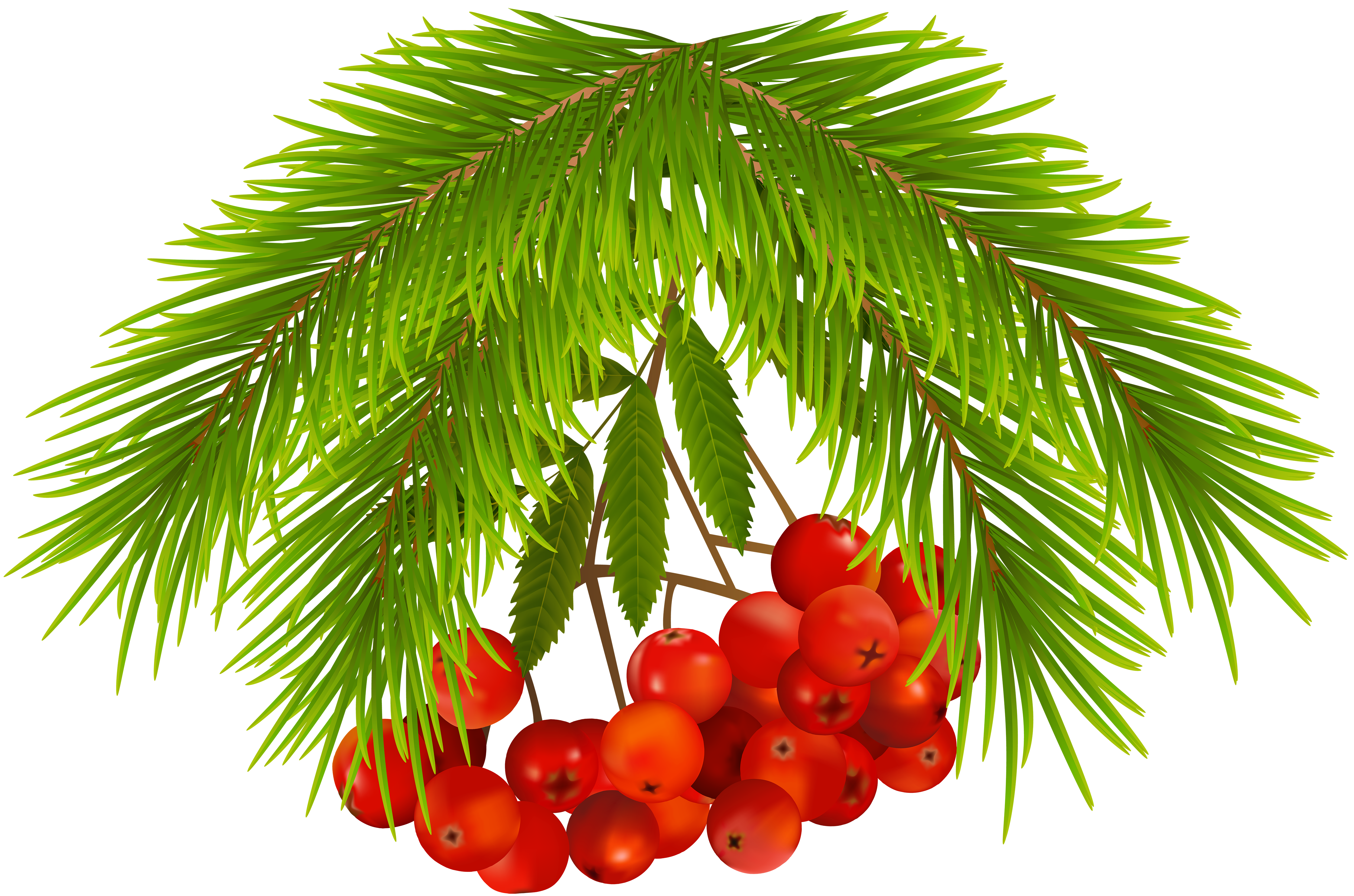 Clipart fruit christmas. Holly berries png clip