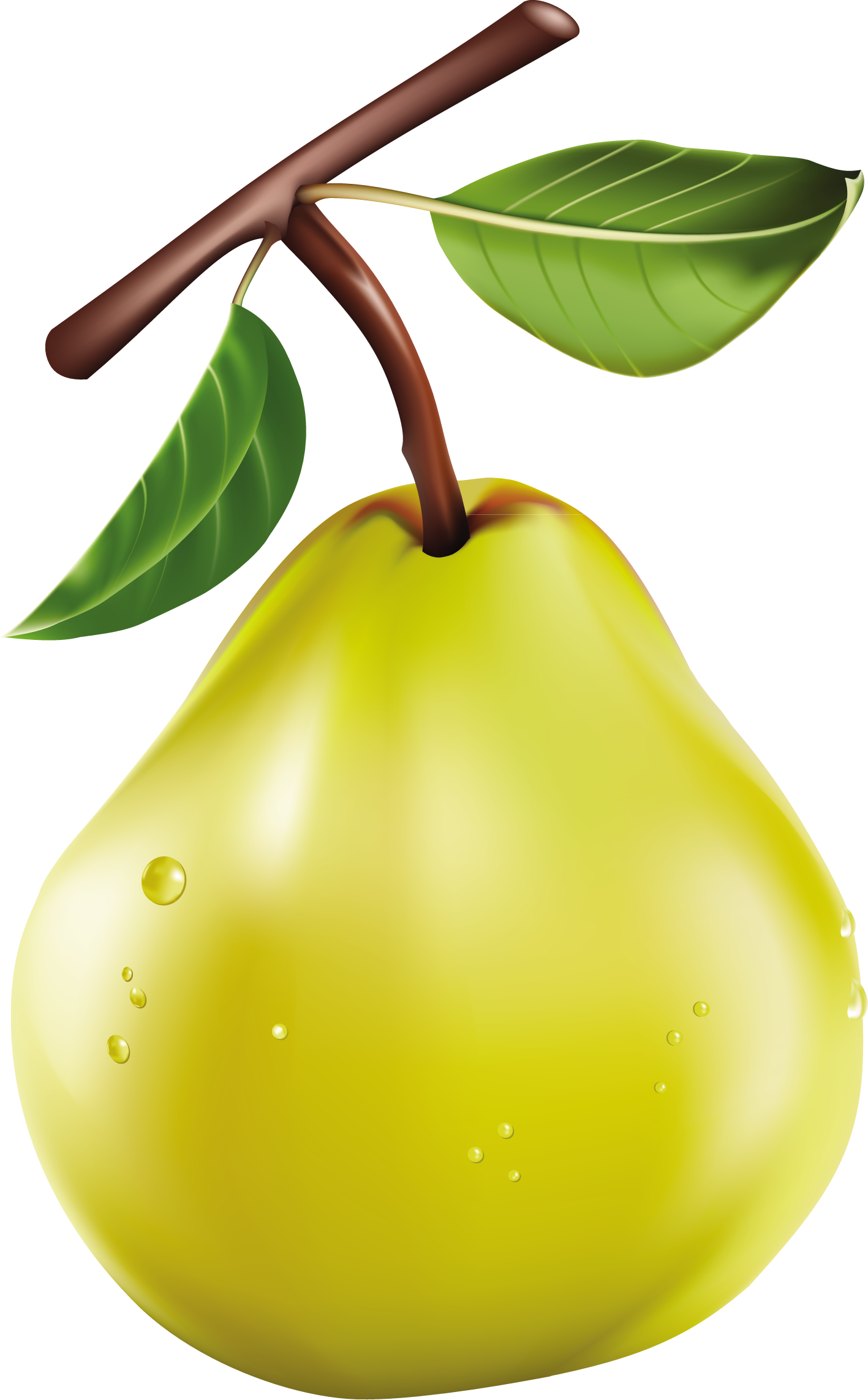 Pin by d ceylan. Pear clipart two