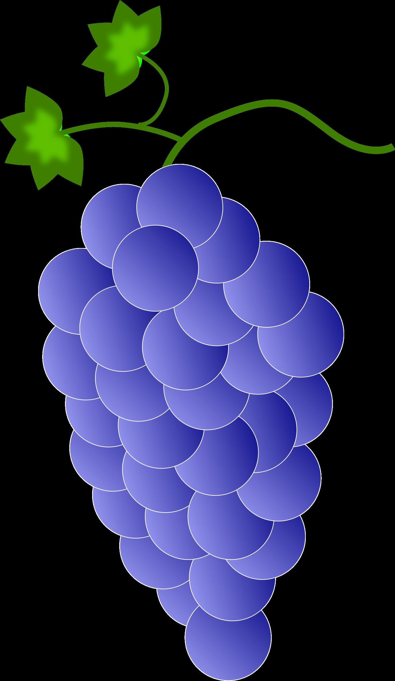 Colored blue big image. Grapes clipart violet