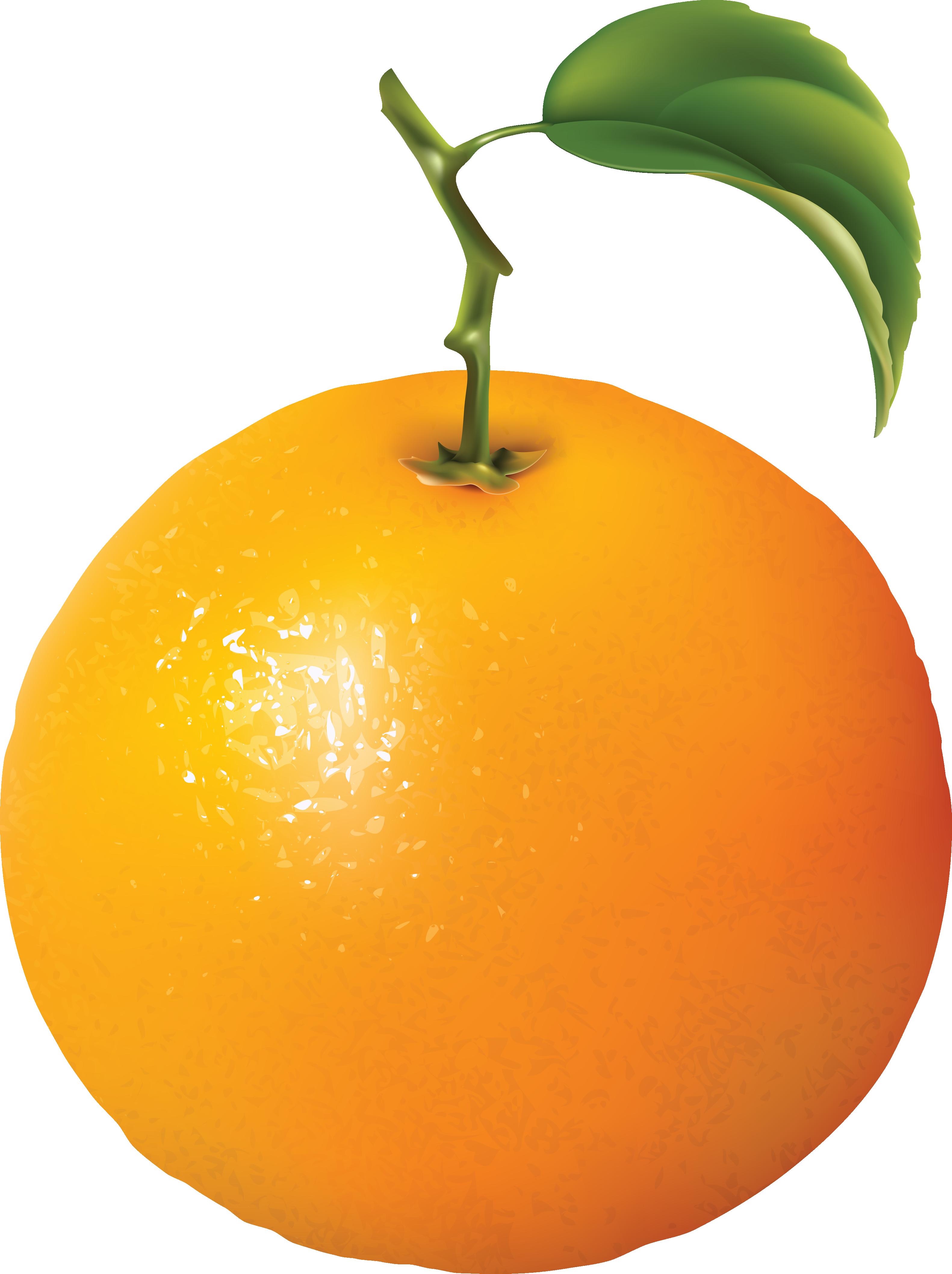 Pear clipart transparent background. Orange diagram clip art