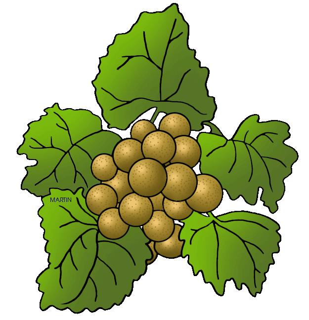 Grape clipart friuts. United states clip art