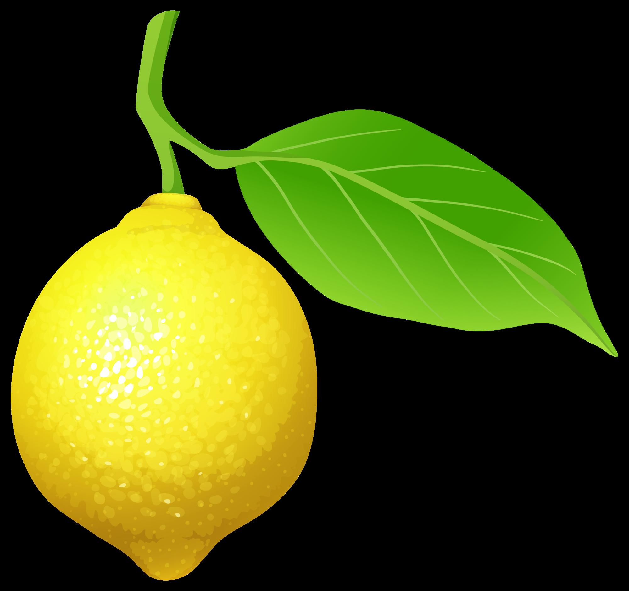 Clipart fruit lemon. Png clip art