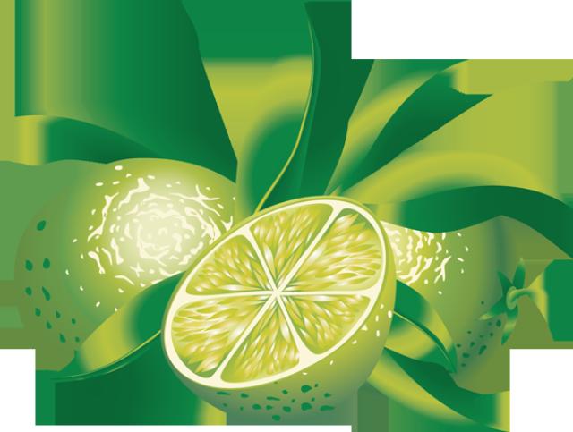 Clip Art of Citrus Fruit