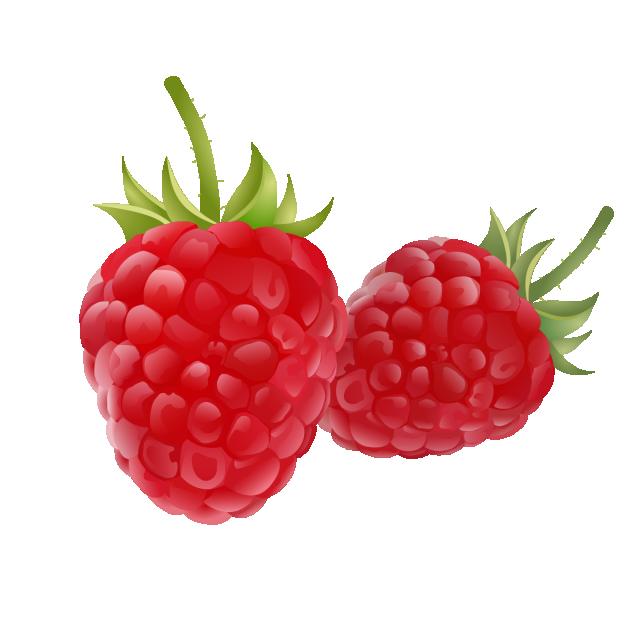 Drawing raspberry logo set. Clipart thanksgiving fruit