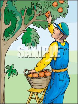 Fruits clipart man. Fruit clip art picture