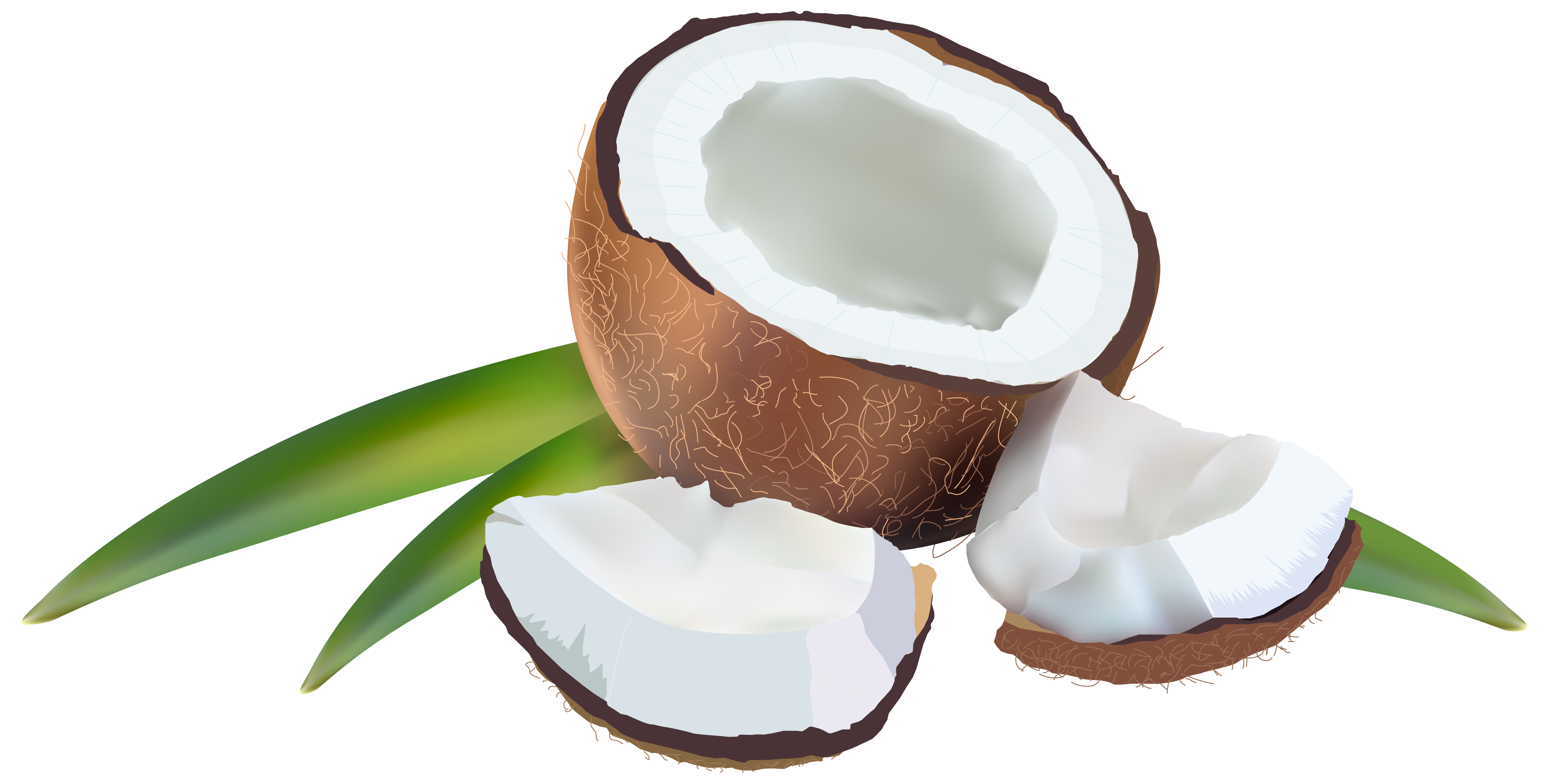 Coconut clipart fresh. With leaves png image