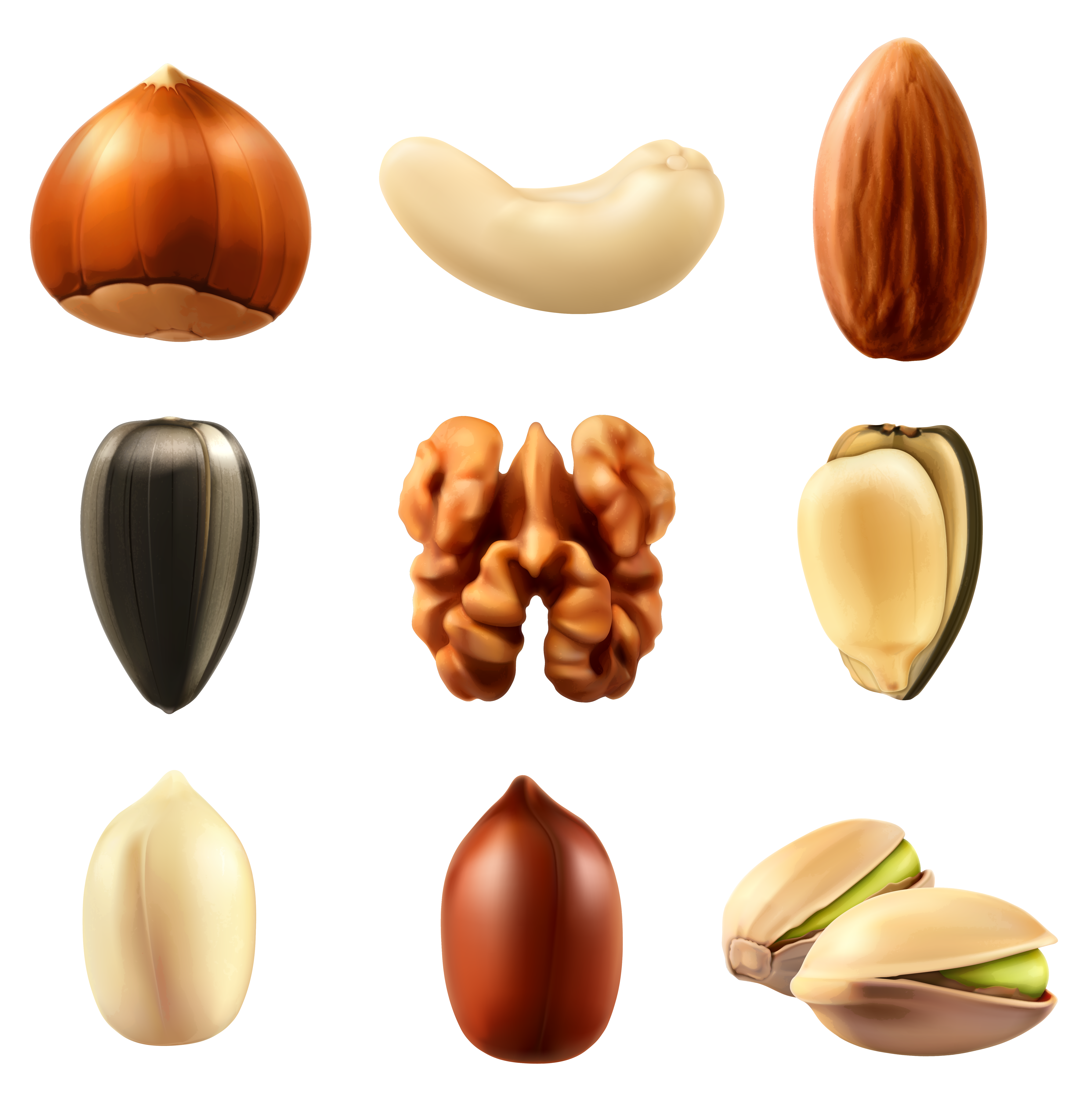 Peanuts clipart nut seed. Nuts collection png clipar