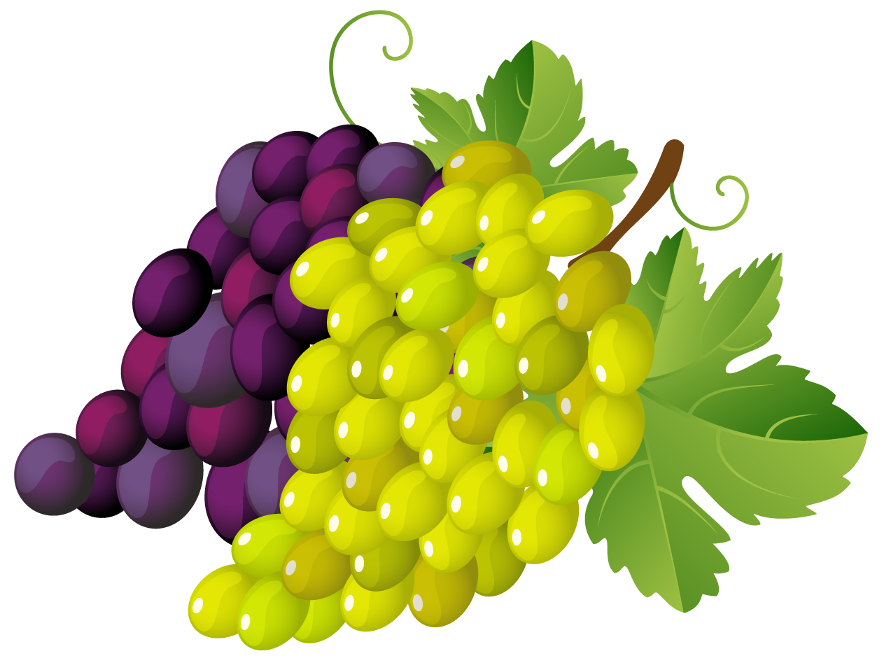 Painted grapes png gallery. Fruit clipart mixed fruit