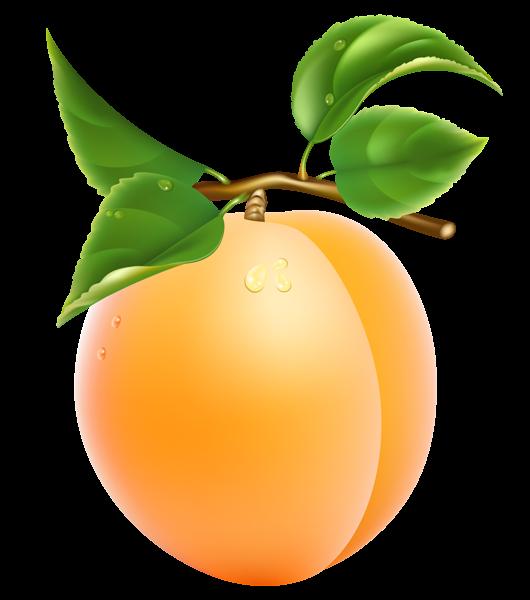 Apricot transparent png picture. Fruit clipart alphabet