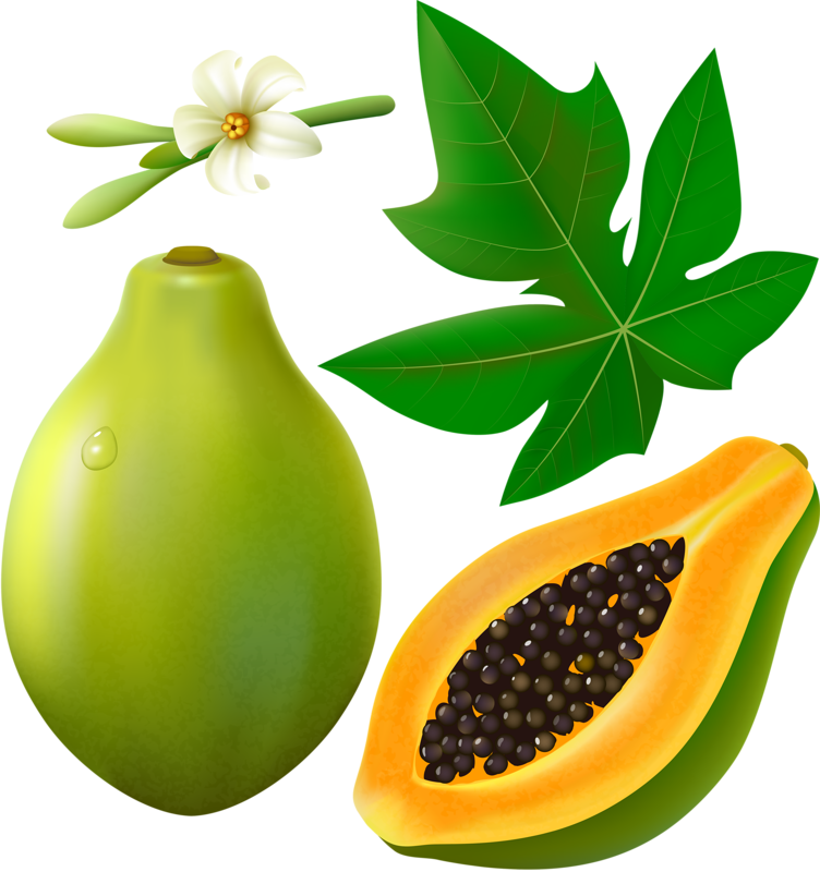 Papaya with leaf and. Fruits clipart tropical fruit