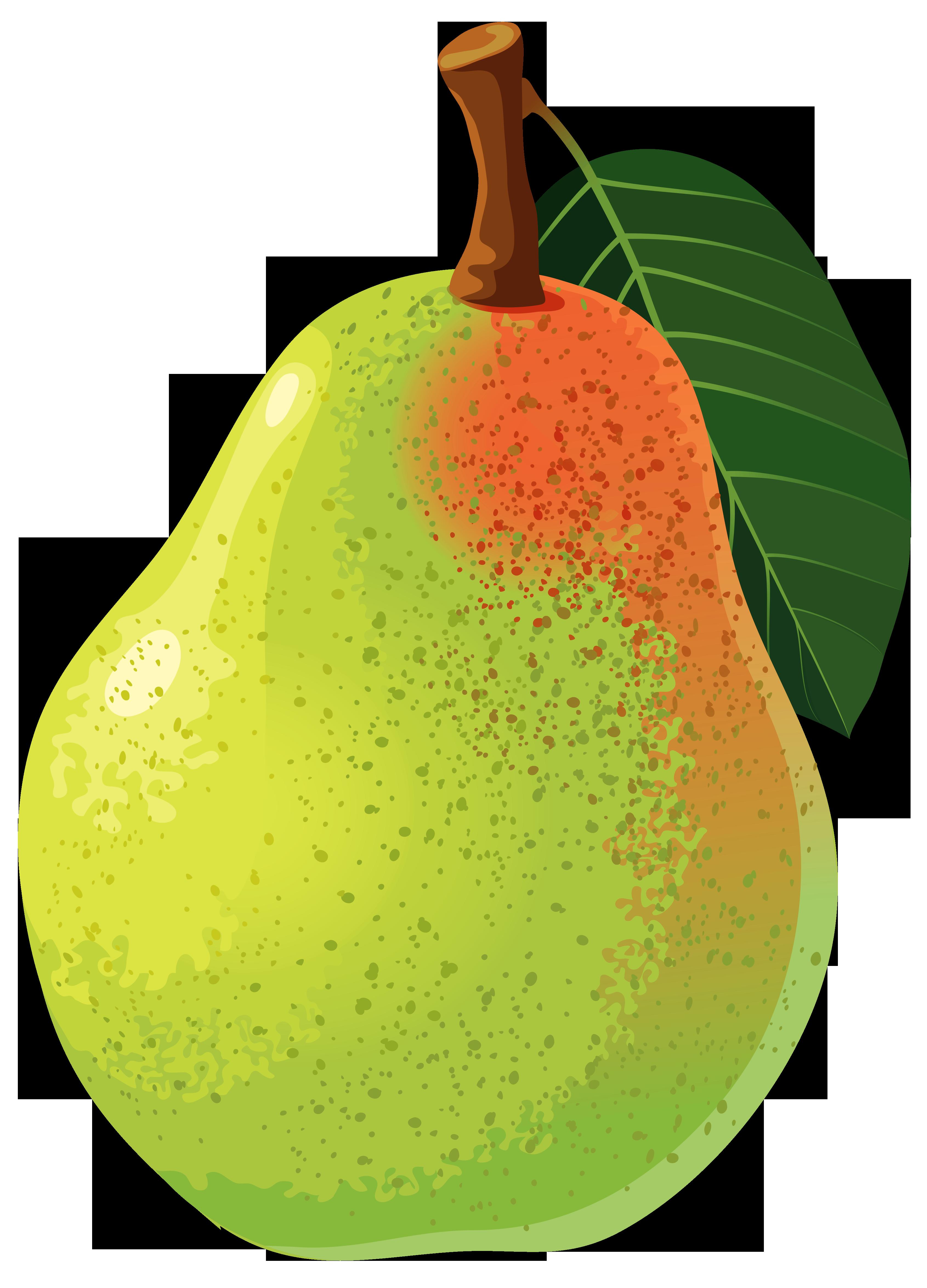 Papaya green pencil and. Pear clipart nashpati