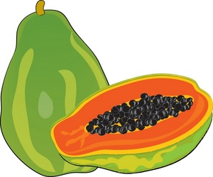 Free pawpaw cliparts download. Fruits clipart paw paw