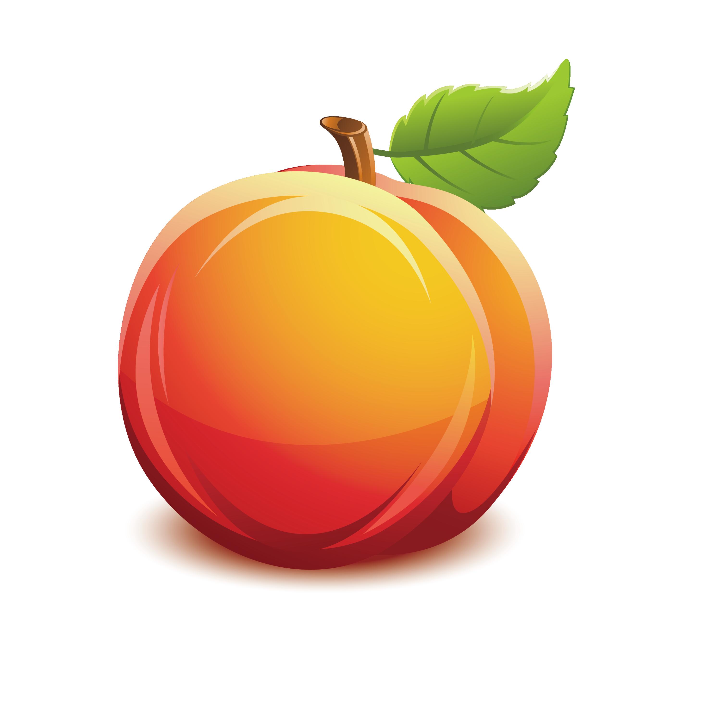 Nectarine fruit clip art. Pear clipart peach