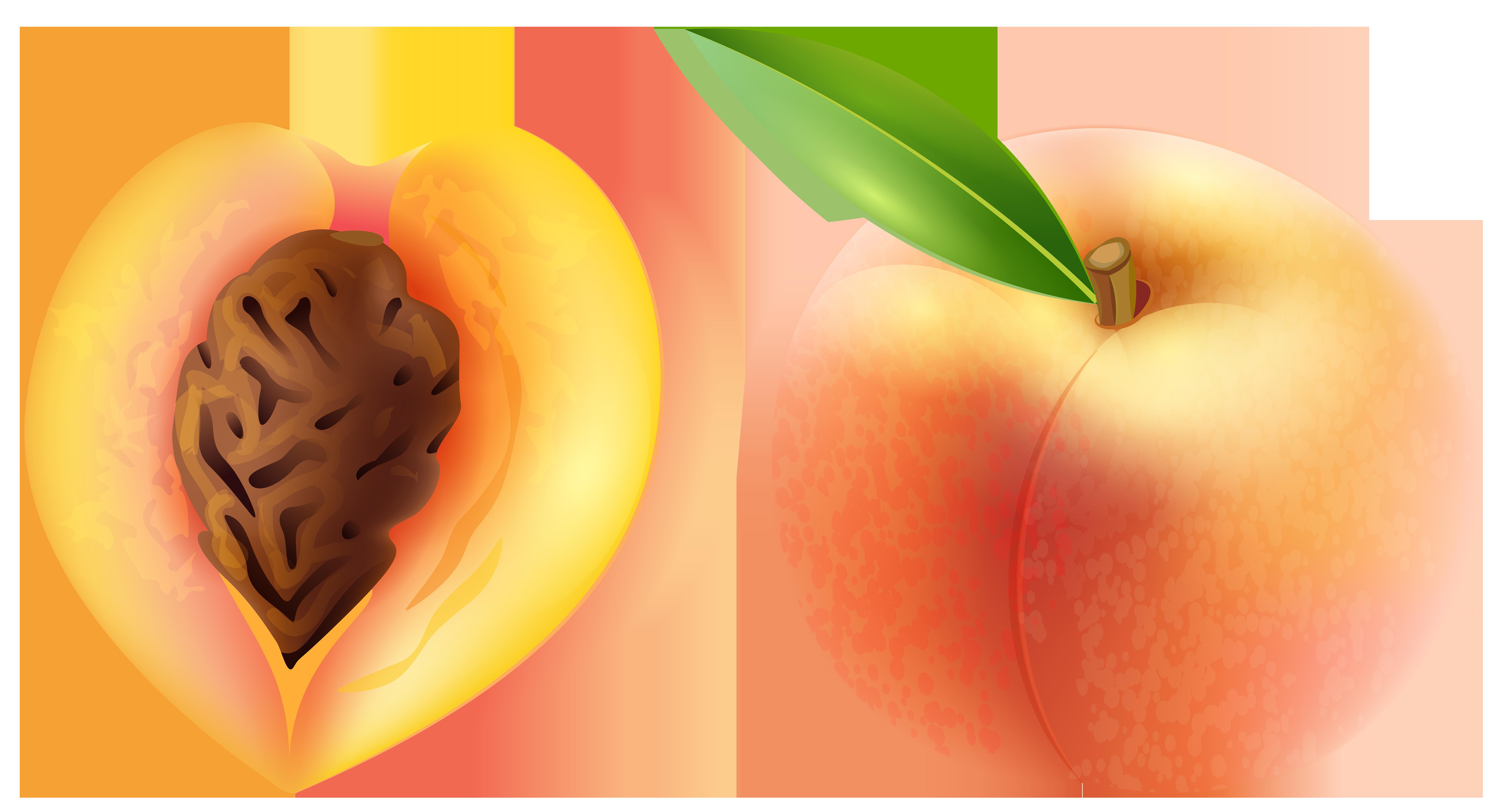 Peach transparent png clip. Georgia clipart fruit