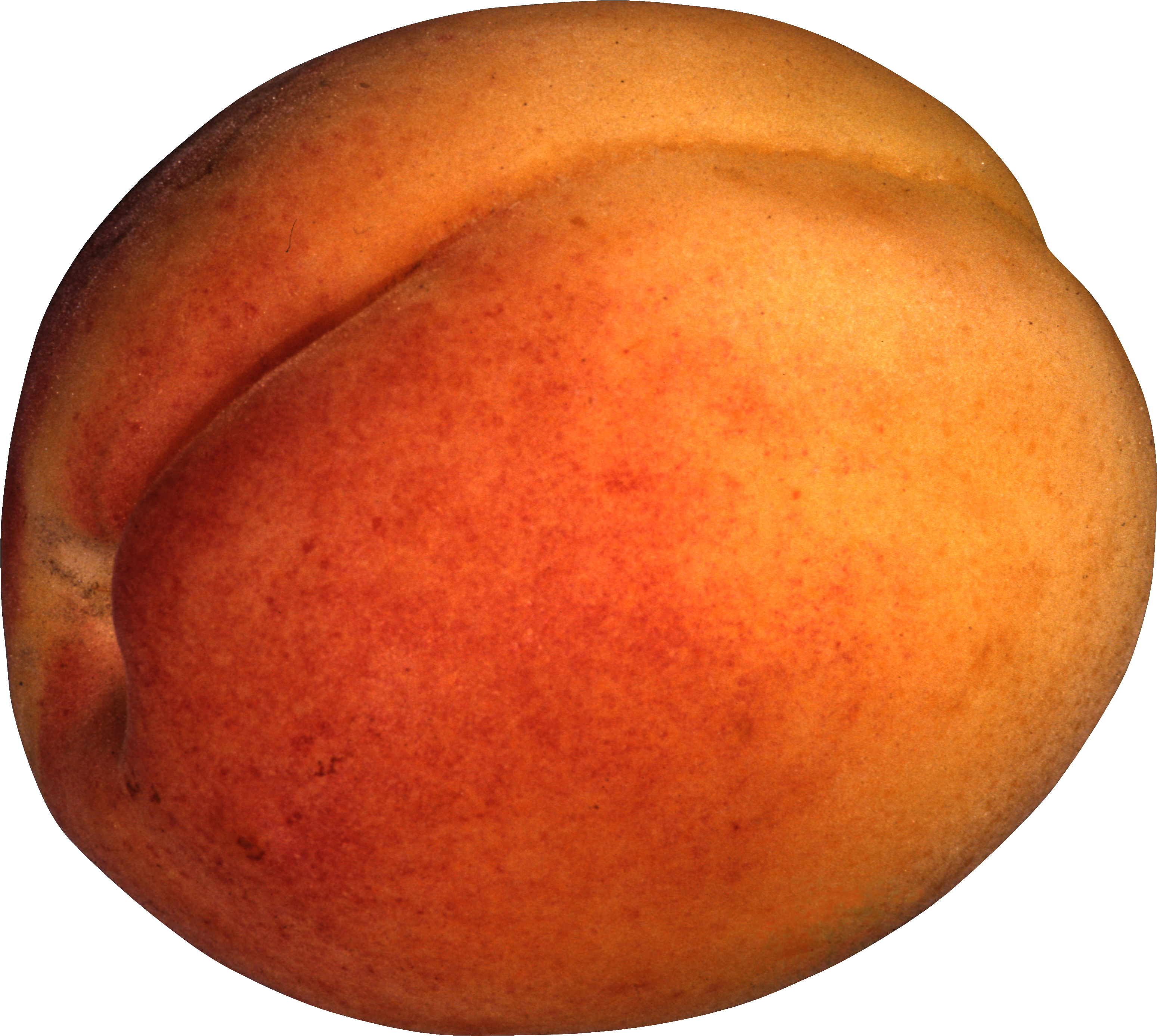 Clipart fruit peach. Png image purepng free