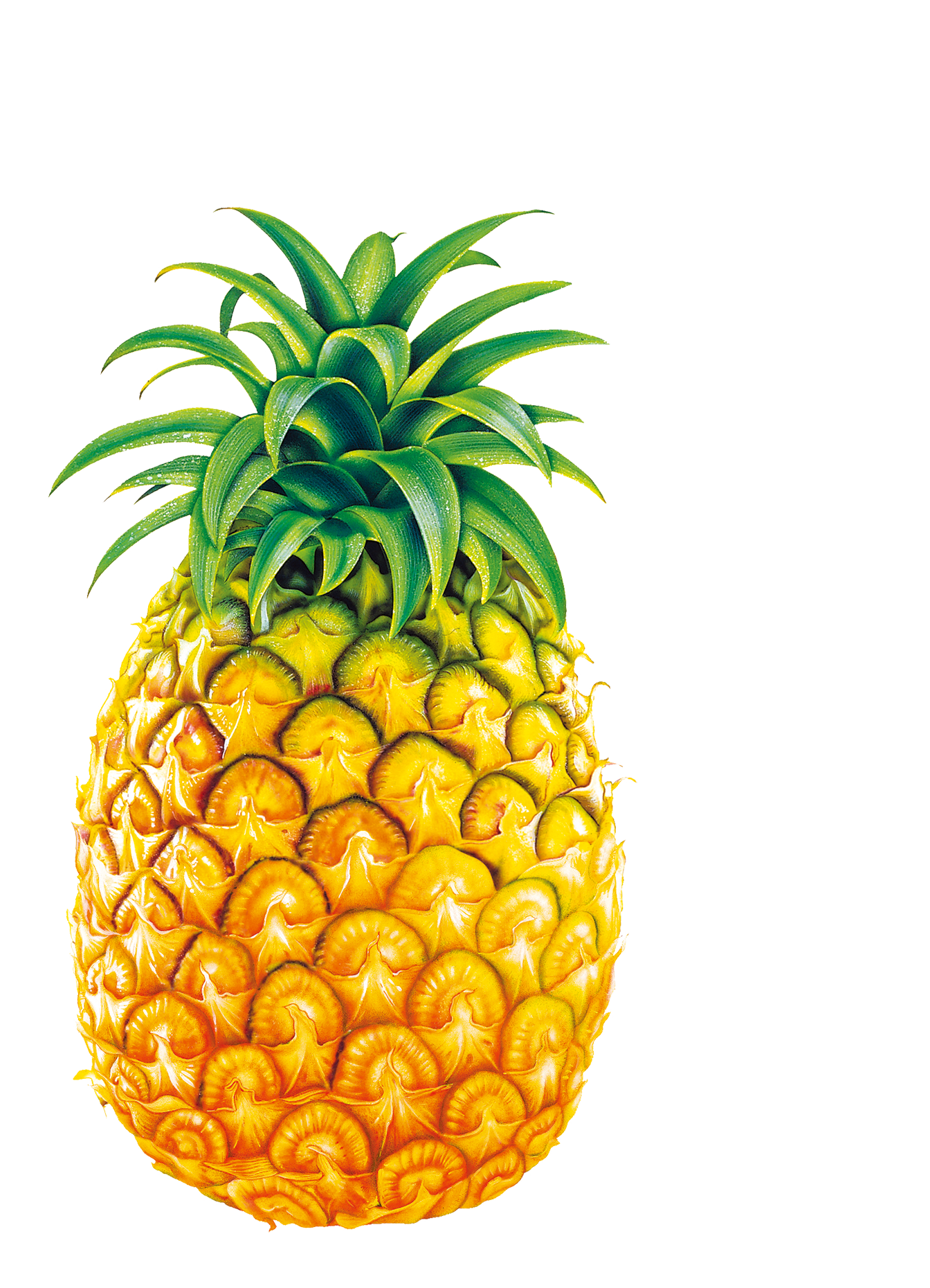 Pear clipart pineapple. Juice fruit bromelain clip
