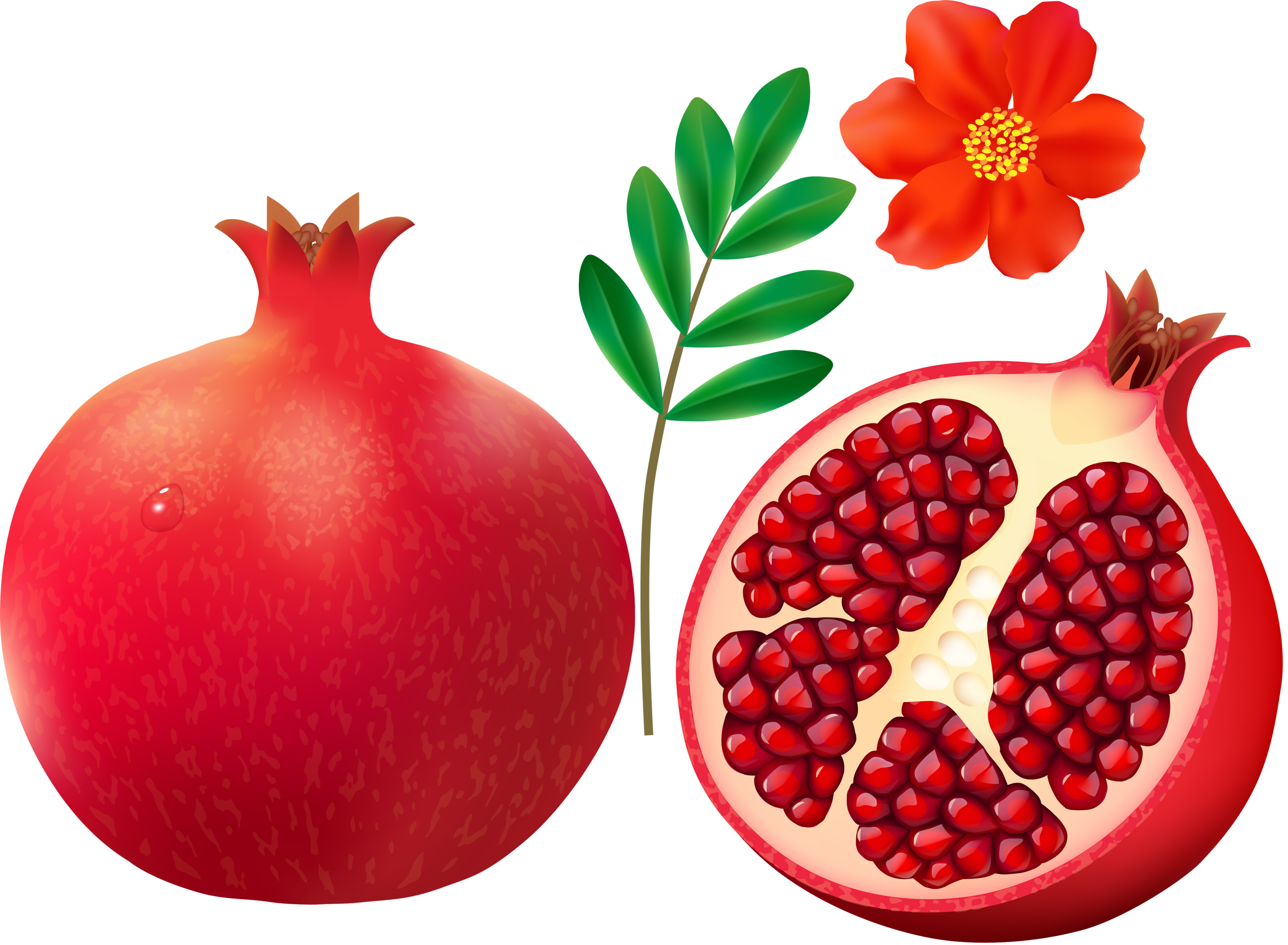 Fruits clipart pomegranate. On white background png