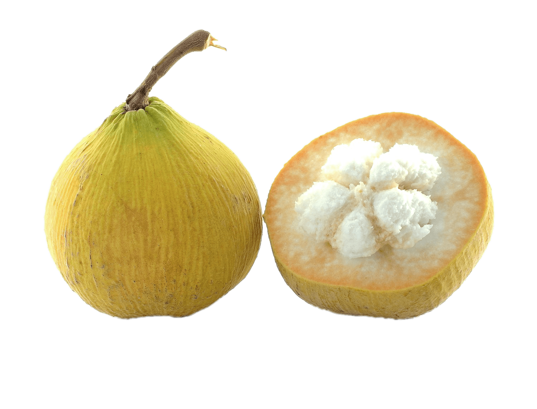 Halved fruit transparent png. Tree clipart santol