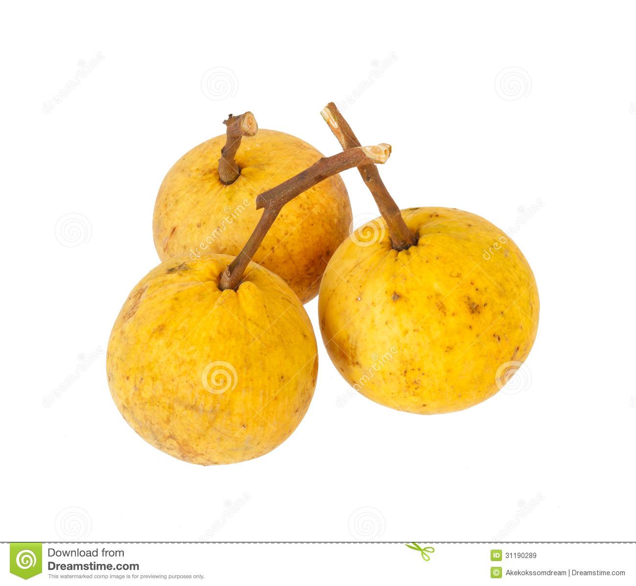 Fruit portal . Fruits clipart santol