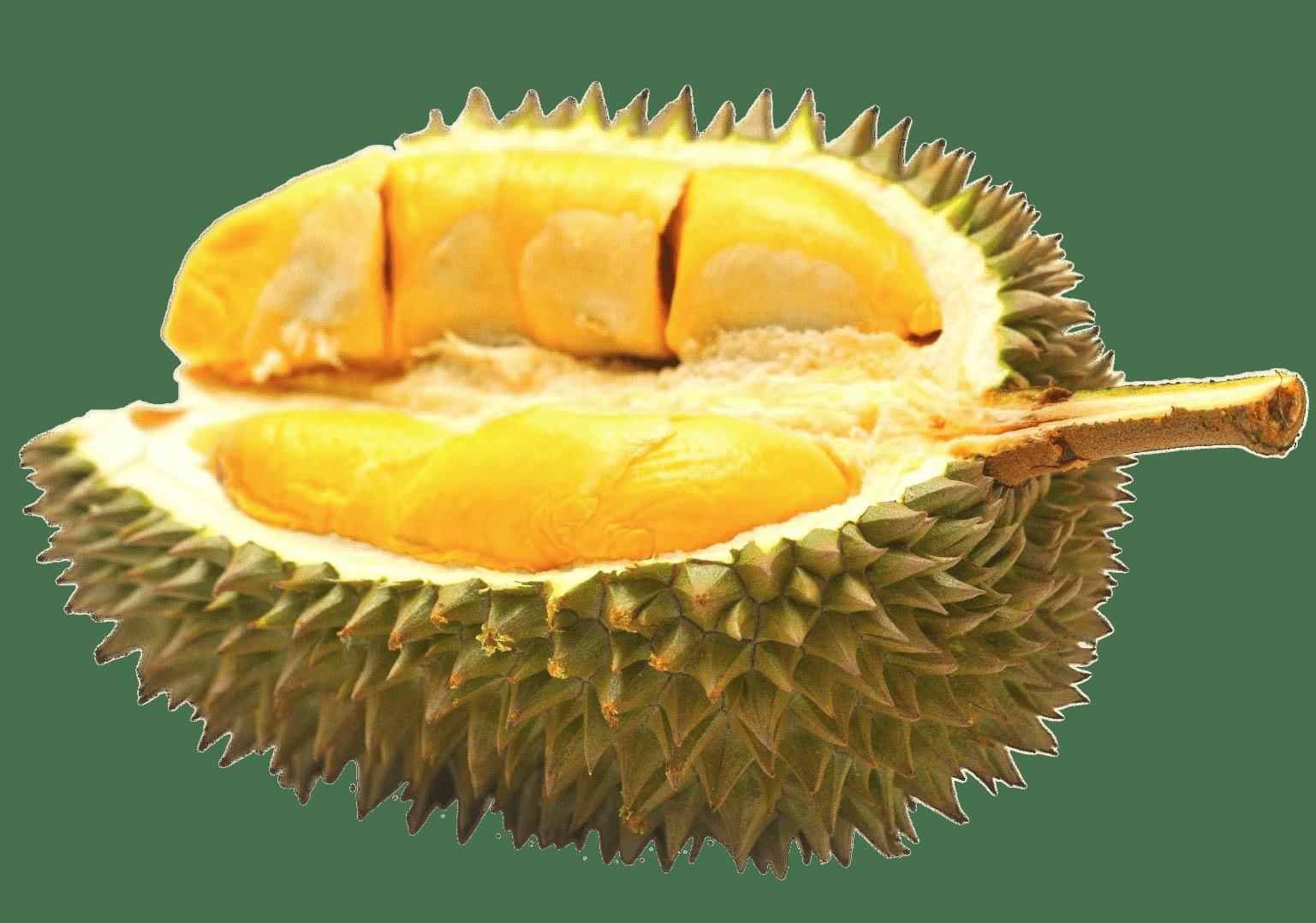 Fruits clipart santol. Half durian fruit transparent