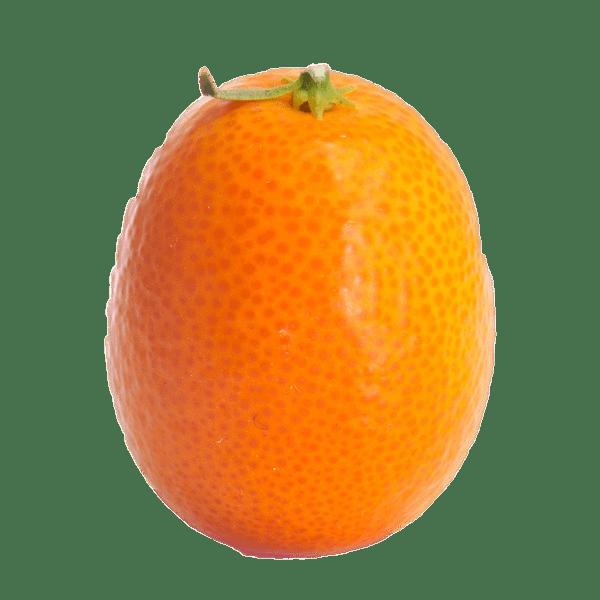 Whole kumquat transparent png. Fruits clipart santol