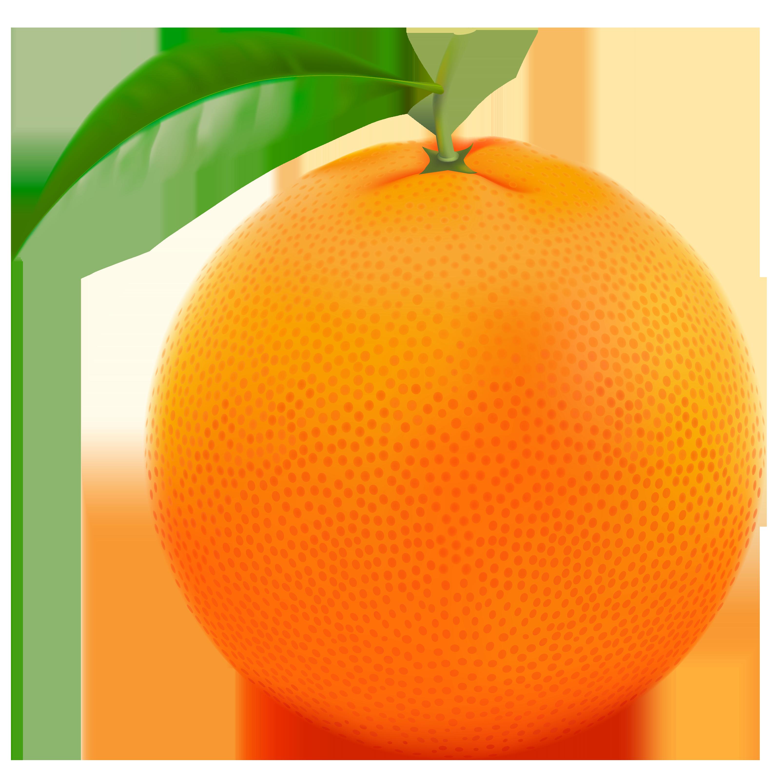 Oranges transparent background