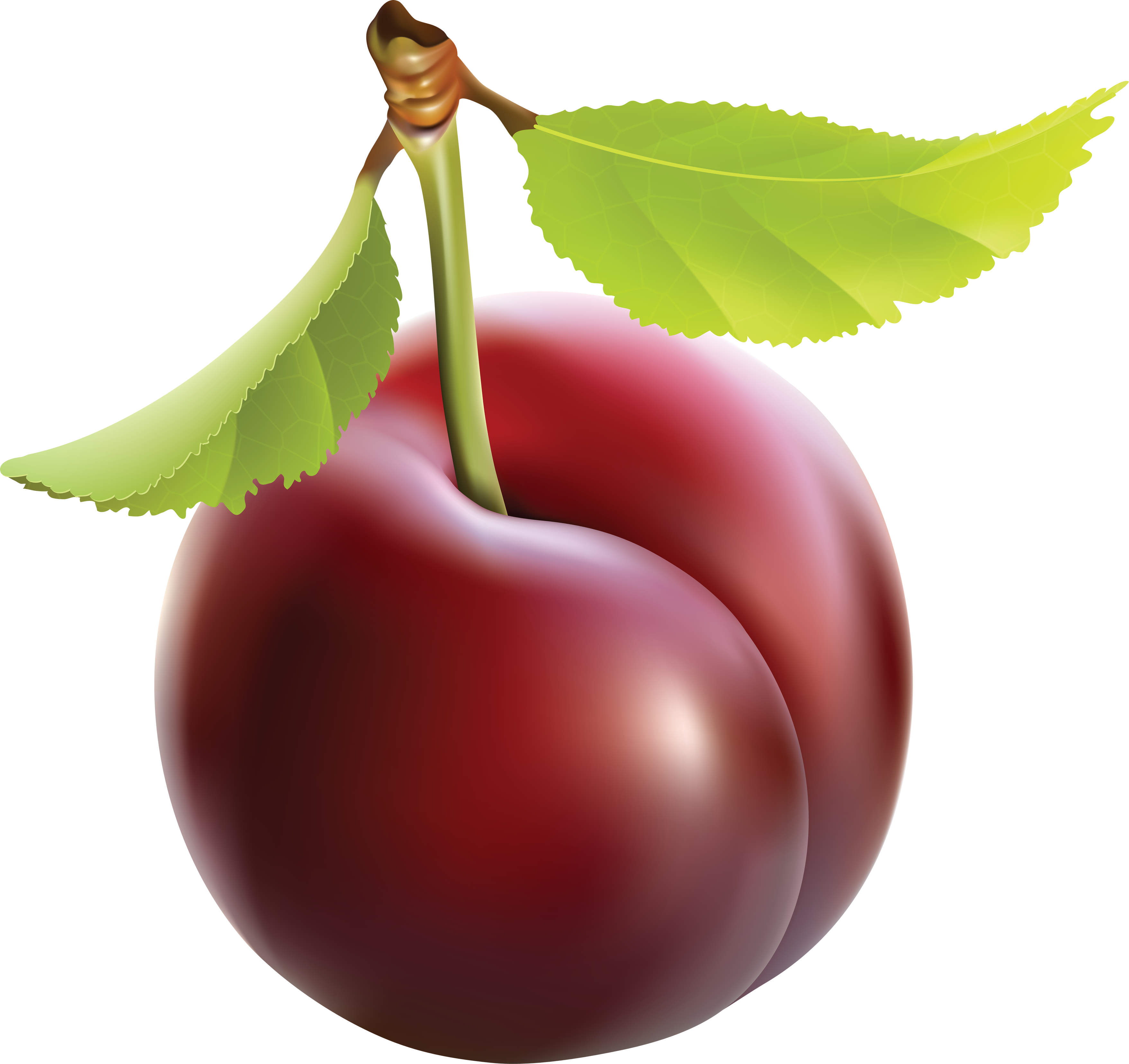 Clipart fruit single. Plum png images free