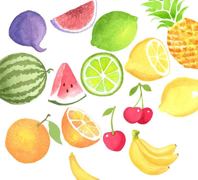 Watercolor fruits set citrus. Clipart fruit summer fruit