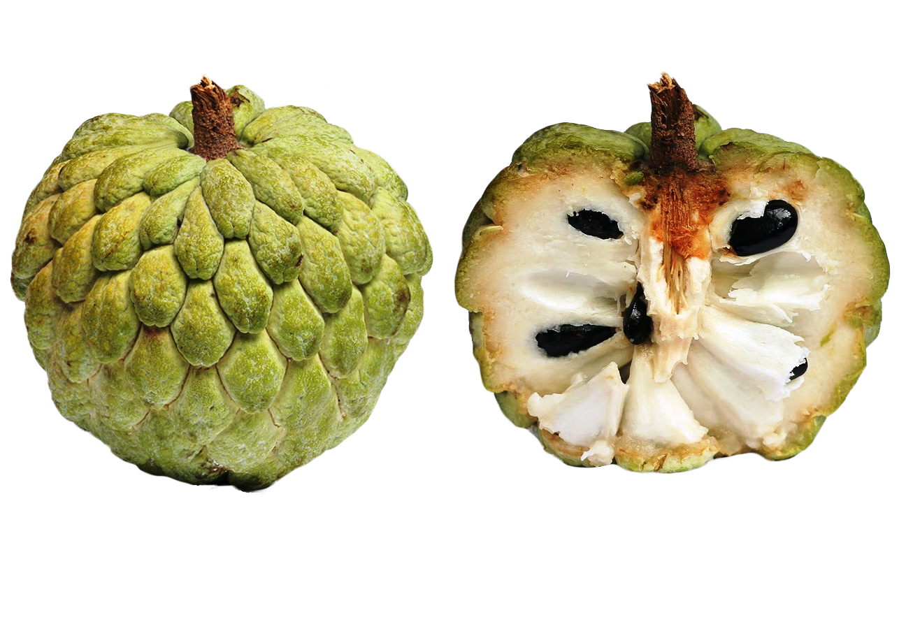 Scale clipart fruit. Exotic fruits types you
