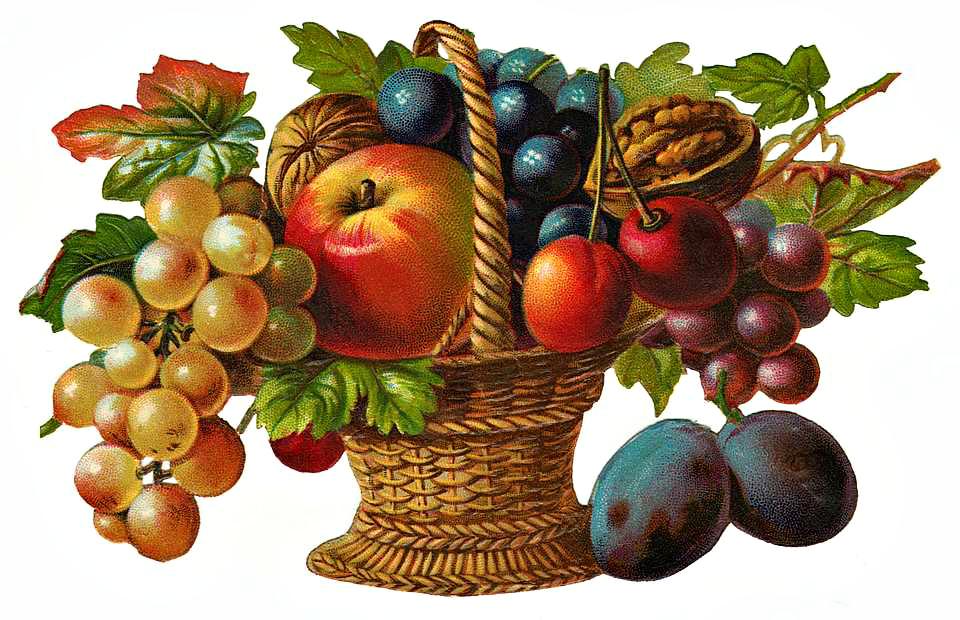 Fruit basket . Fruits clipart victorian