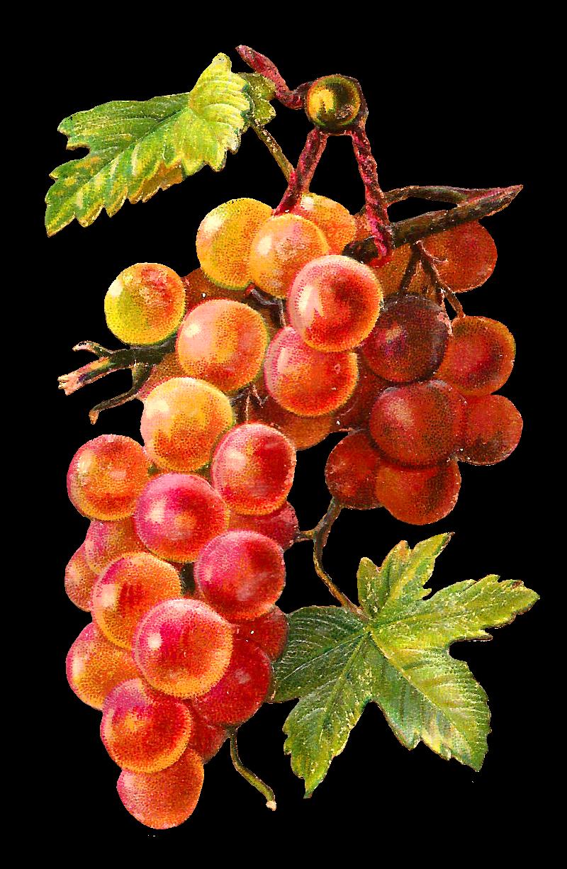 Fruits clipart victorian. Antique images free fruit