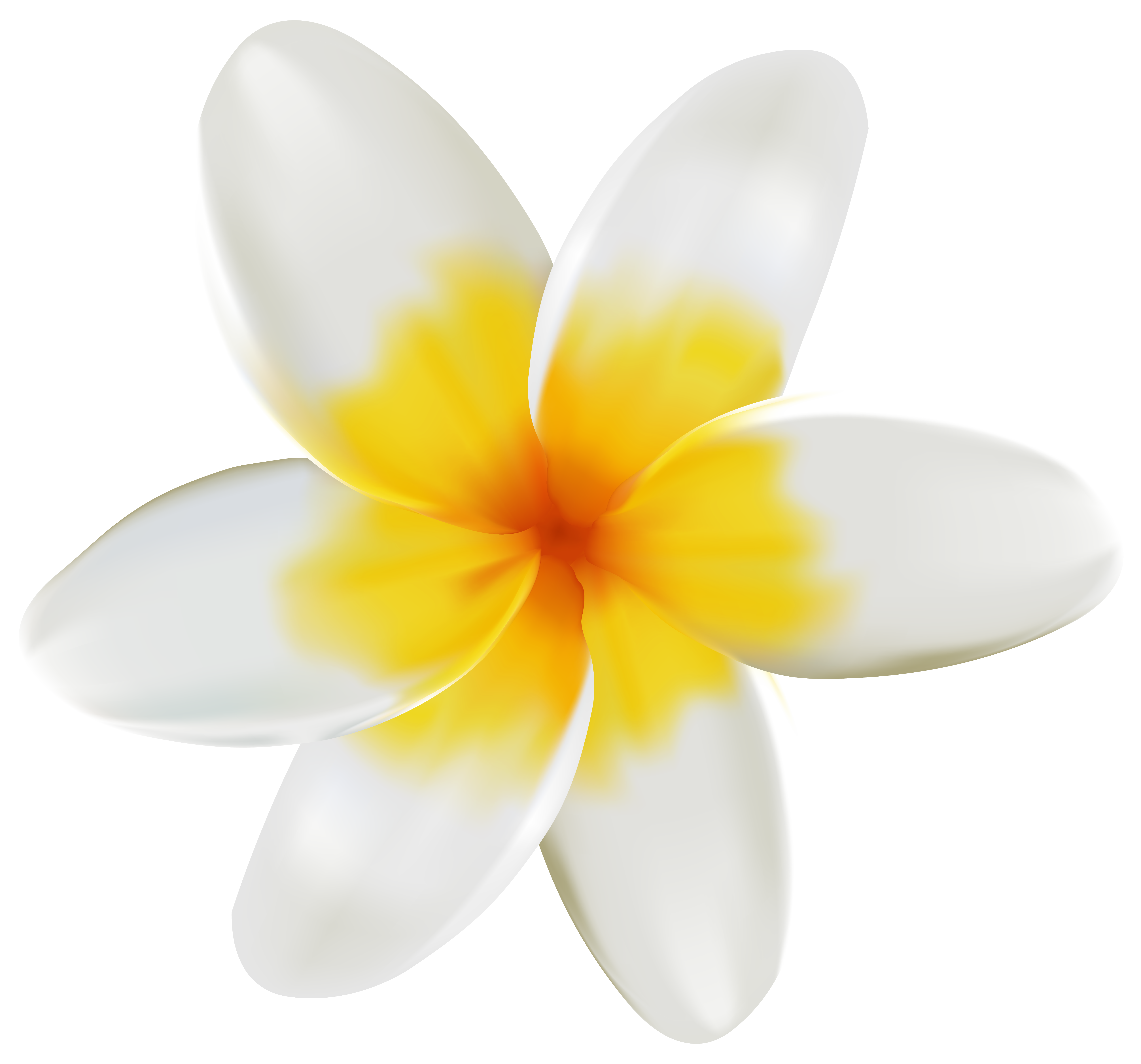 Clipart image gallery yopriceville. Plumeria flower png