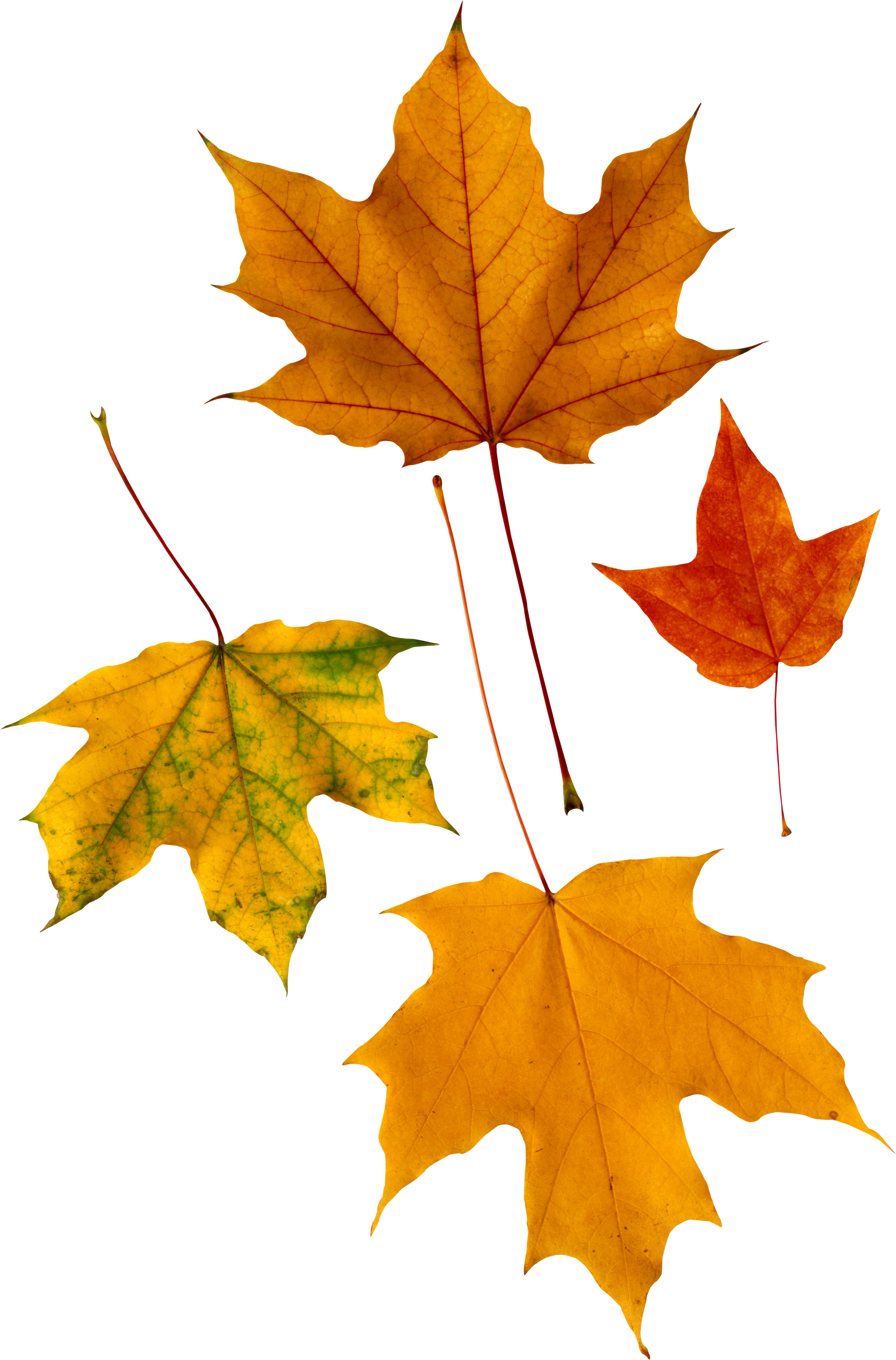Clipart gallery autumn. Leaves icon web icons