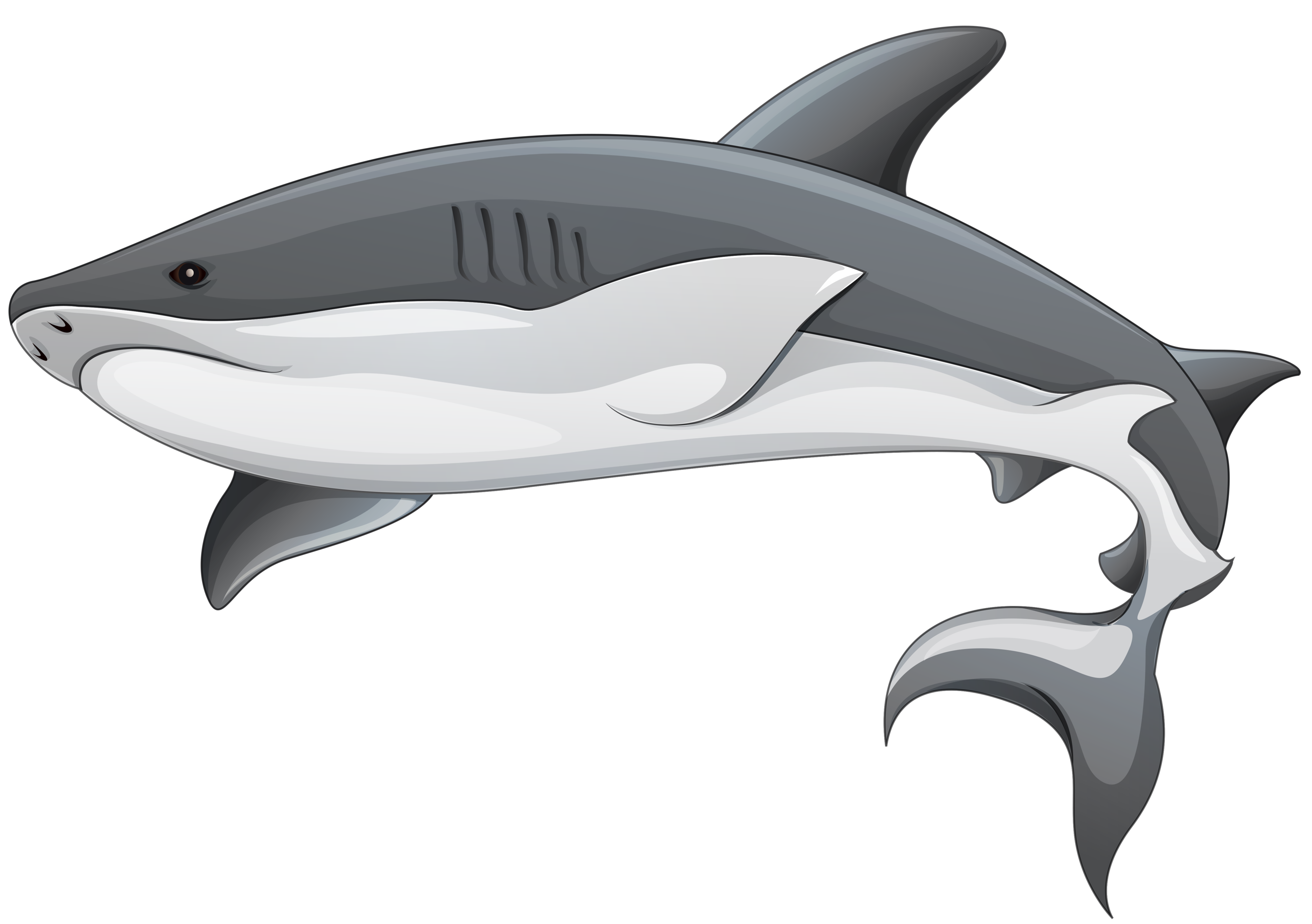 Squid clipart sting ray. Shark clip art sealife