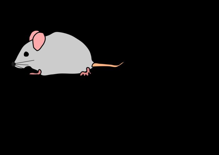 Cute bclipart free images. Clipart rat desert mouse