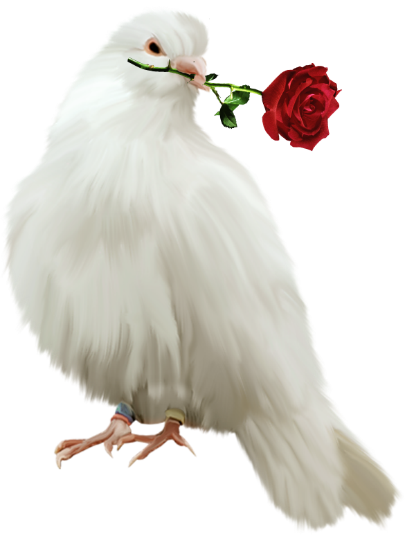 Painted with rose free. Dove clipart red