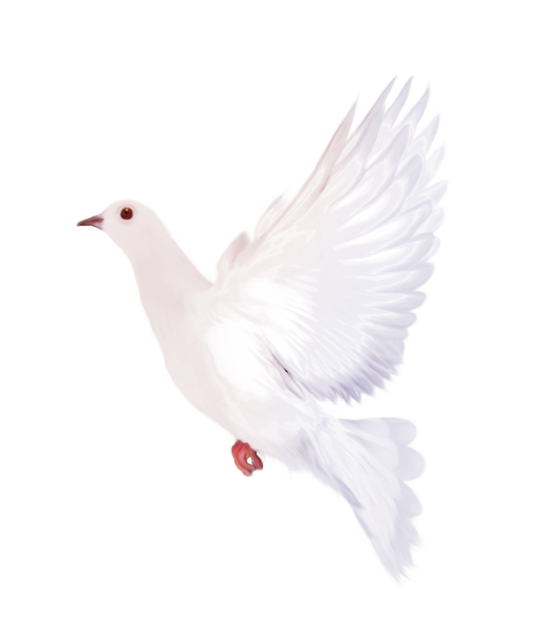 Peace clipart small dove. White gallery yopriceville high
