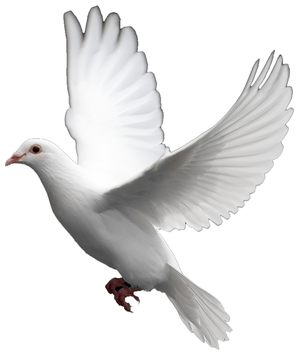 Clipart wedding dove. White images the symbol