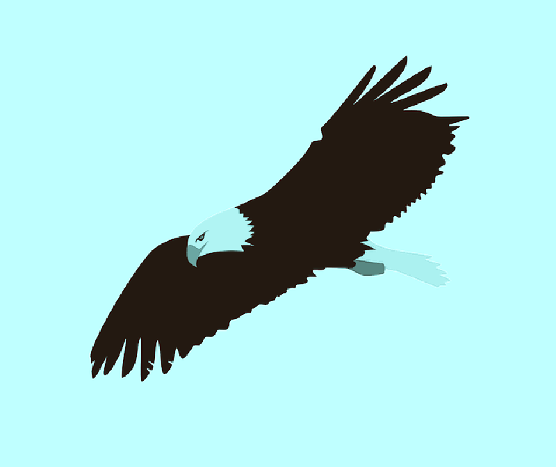 Flying drawing at getdrawings. Eagle clipart simple