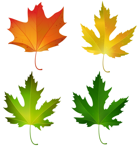 Clipart gallery history museum. Fall maple leaves set