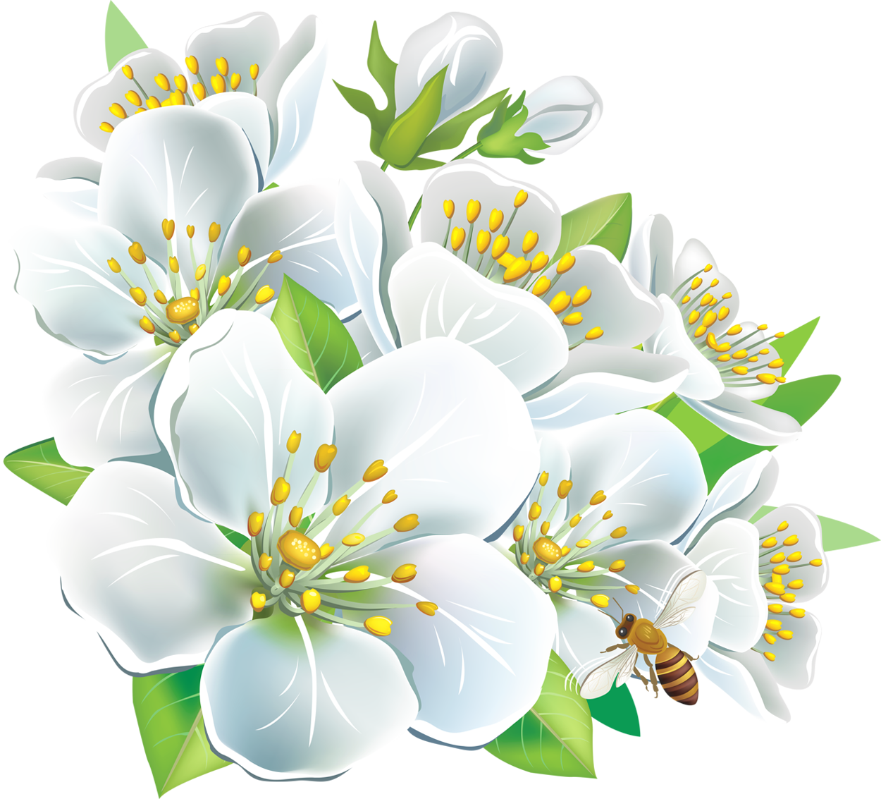 White flowers png yopriceville. Clipart gallery large flower