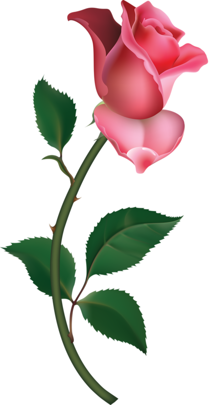 Large pink rose bud. Crystal clipart painted