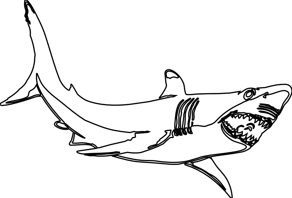 Orca clipart coloring page. Great white shark clip
