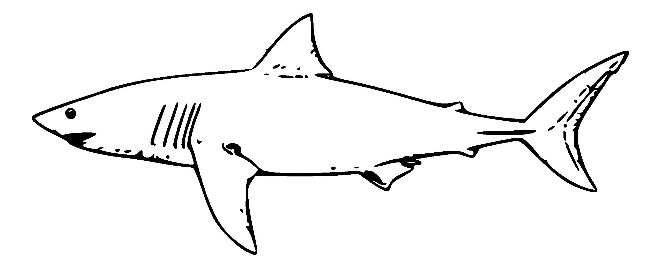 Black and white panda. Clipart shark mako shark
