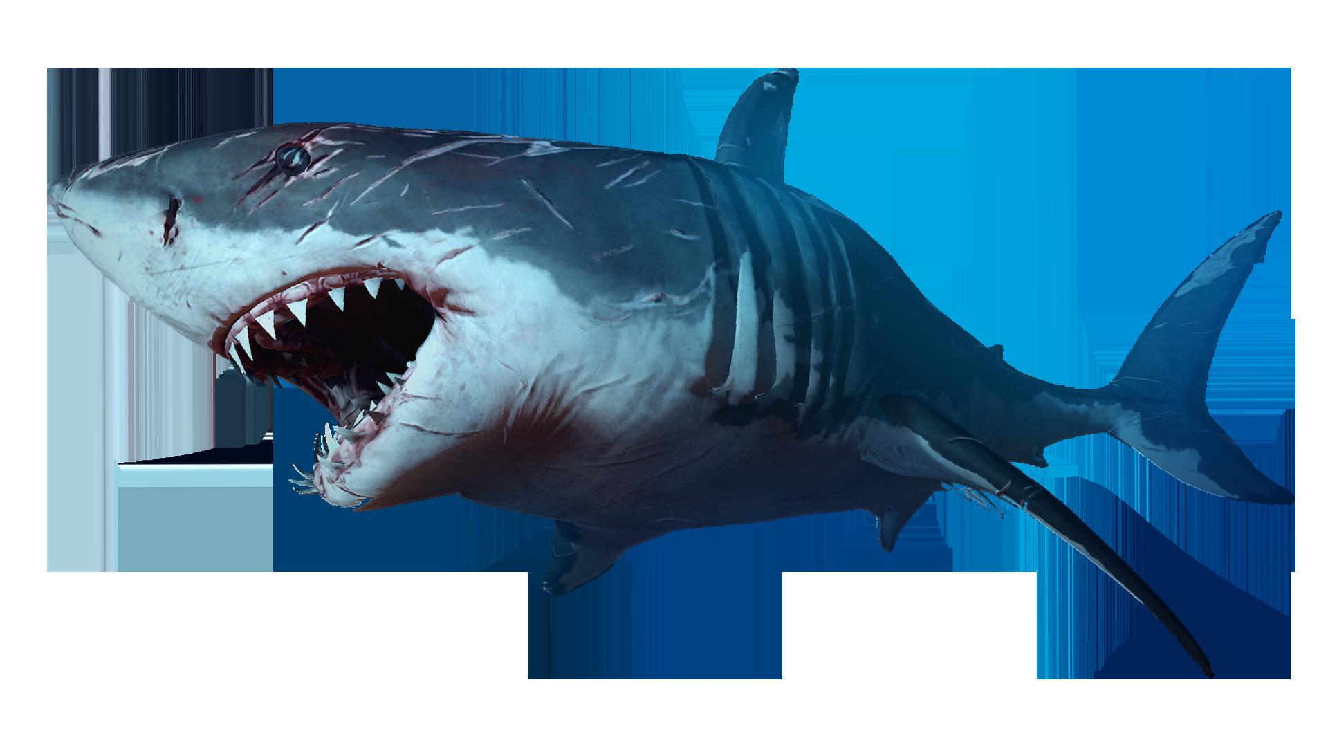 Clipart shark megalodon shark. Png animal pinterest and