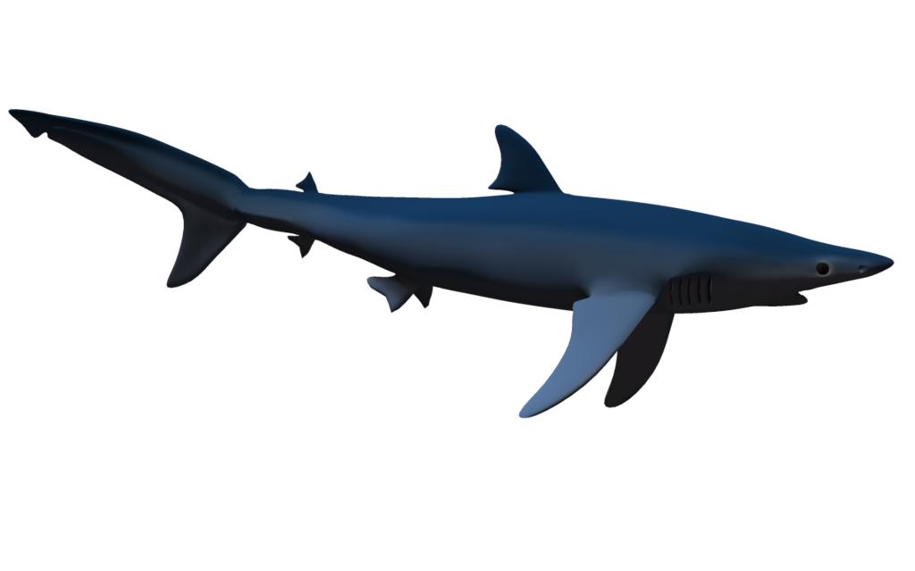 Shadow images google search. Clipart shark frilled shark