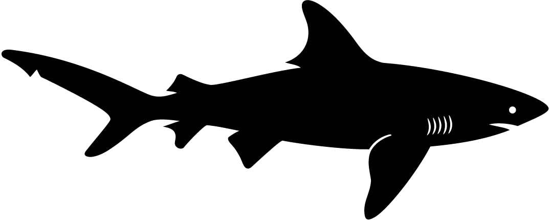 Shadow pencil and in. Clipart shark megalodon shark